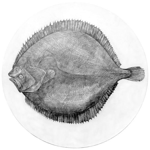Memory and the tideline - Turbot