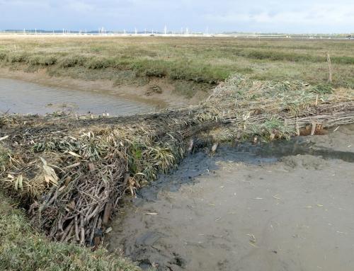 Falkenham Saltmarsh Tidal Management Scheme