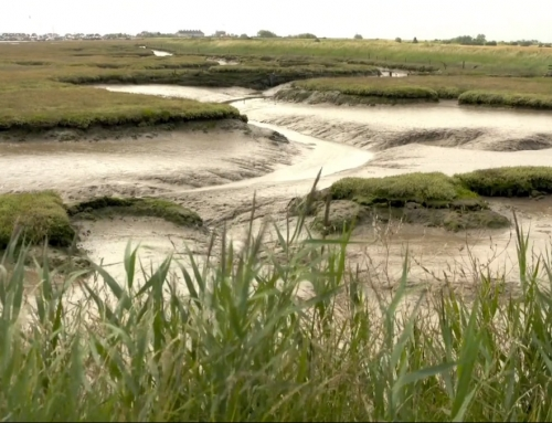 Saltmarsh management work at Falkeham Marsh